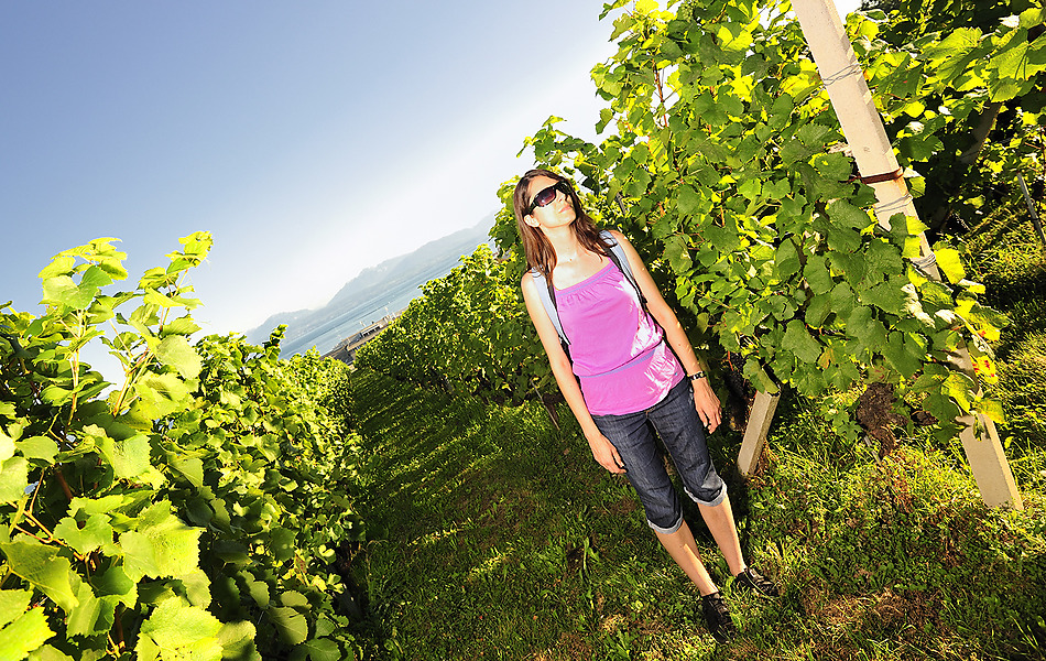 Vineyard walk in the Morges Region